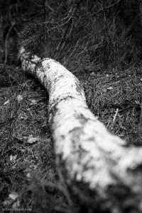 Anakonda v českých lesích