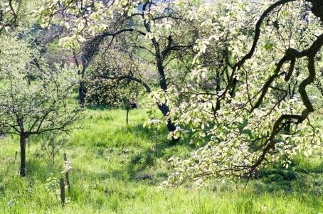 Maruščina a Tomova zahrada, foto Ester Dobiášová