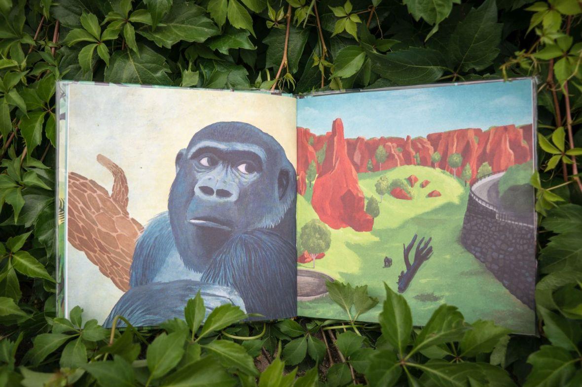 Gorilí táta (2)