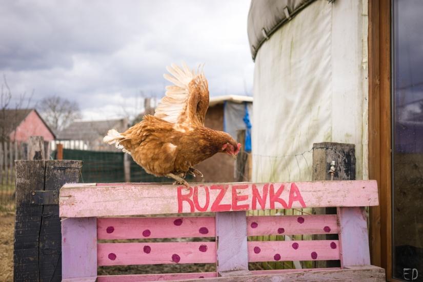 2019_březen_Farma-Nadeje_Dobiasova (9)