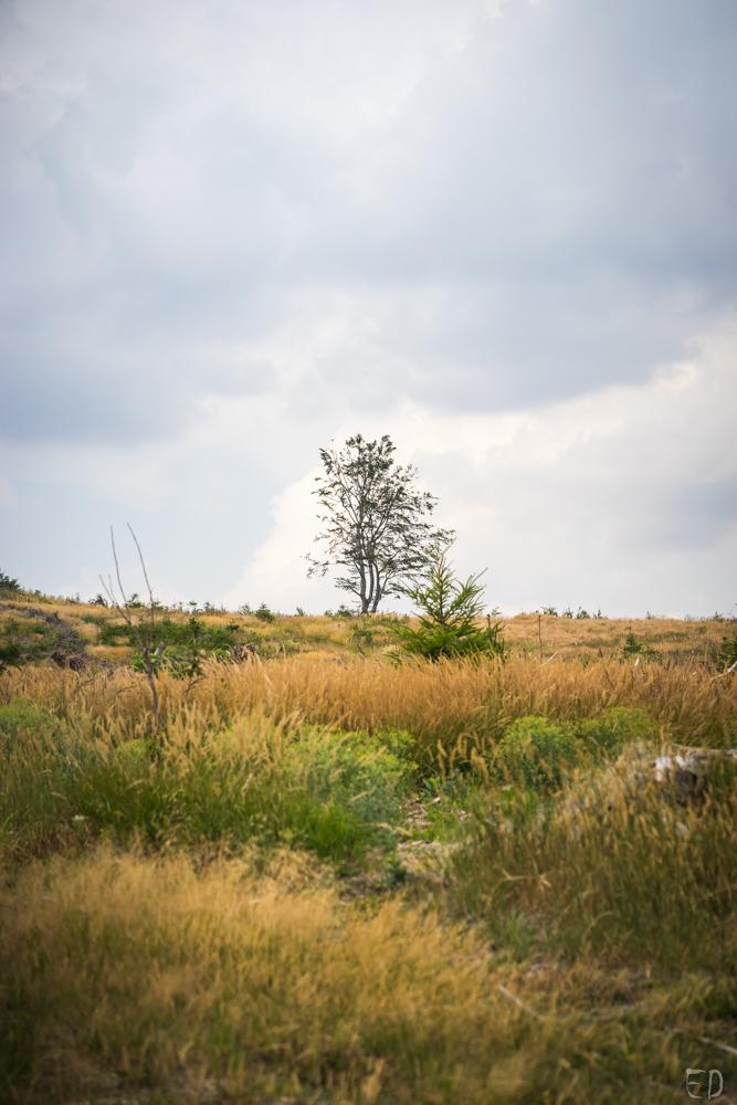 Severní Morava 2019