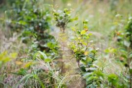 Severní Morava 2019. Přemnožená zvěř je příliš mlsná a listnáče nikdy nedorostou v les.